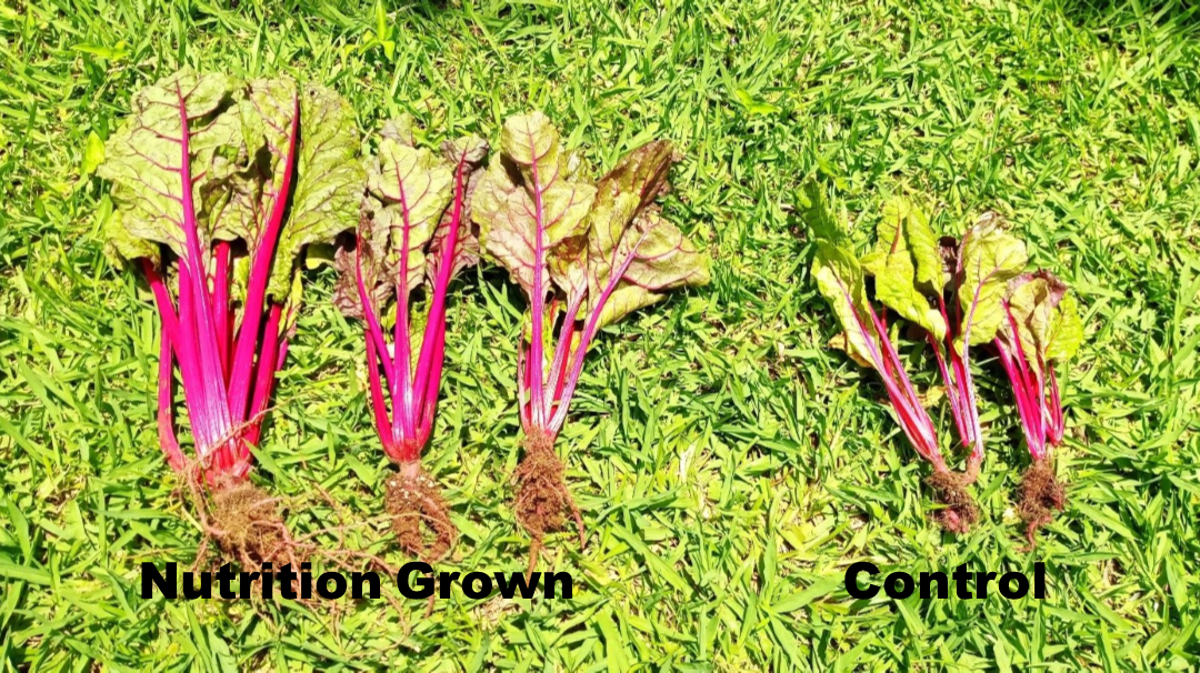 2020-2021 Nutrition Grown Farmers' Educational Program and Farm Trials Report–HUGE Production Increases