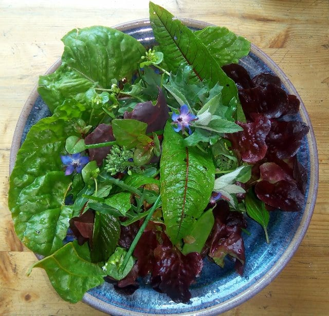 Nutrition Grown Biophoton Salad –SO Amazing For Your Health